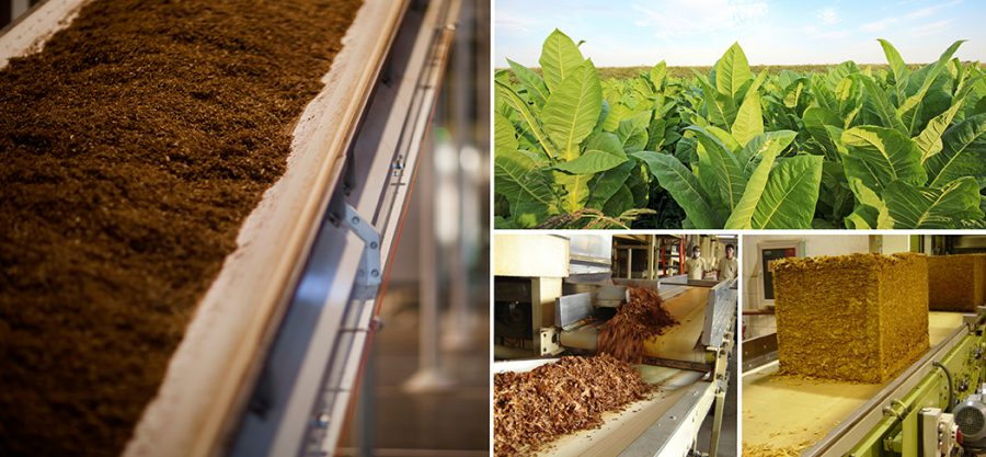 Agro Conveyor Belts - Tobacco