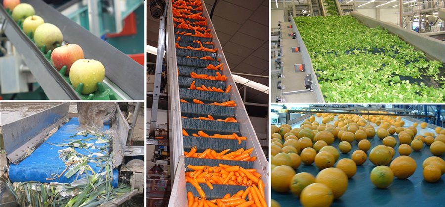 Conveyor Belts - Fruits & Vegetable