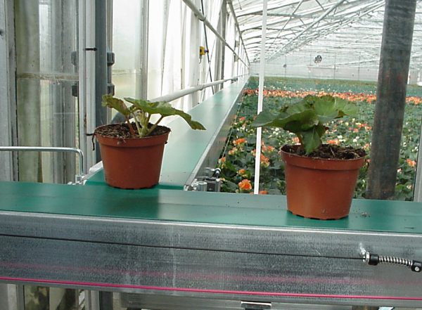 Esbelt Conveyor Belts - PU Breda for greenhouses