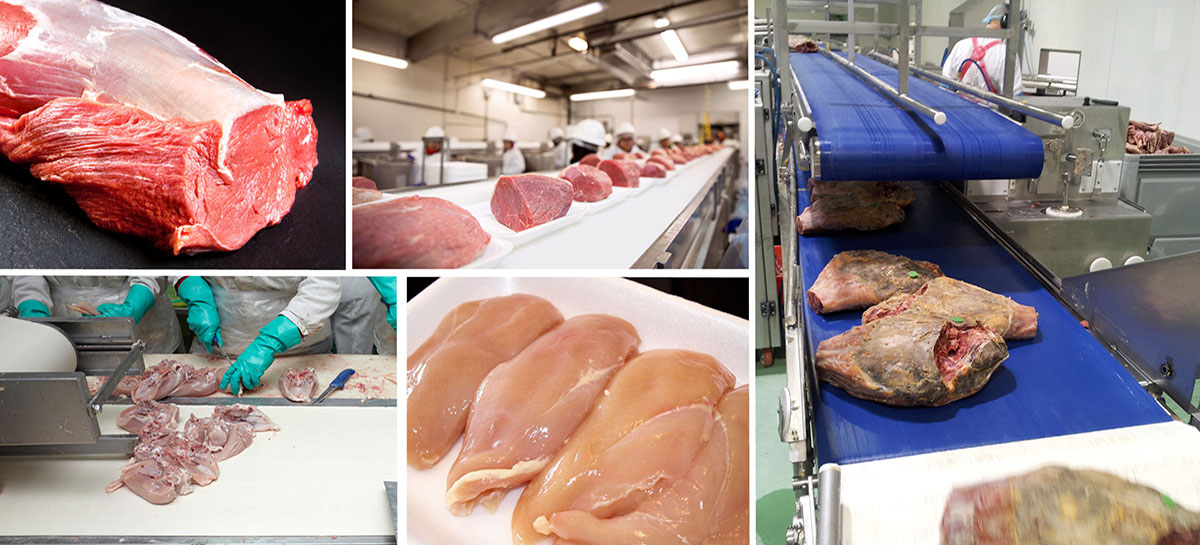 Anti-microbial Food Belts for Meat & Poultry