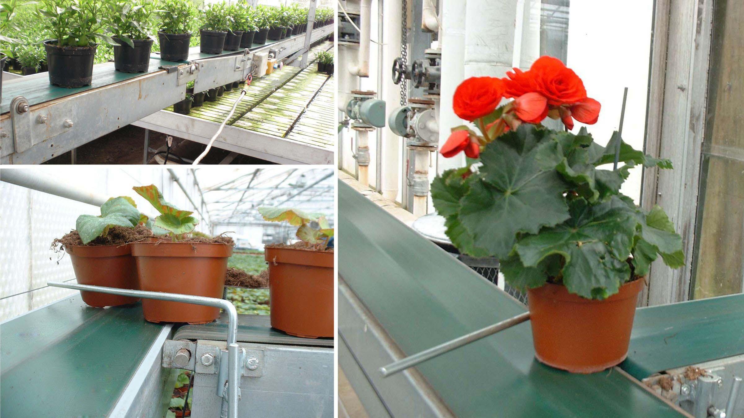 Esbelt Conveyor Belts - PU Breda for greenhouses